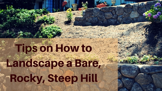 Tips On How To Landscape A Bare Rocky Steep Hill U00b7 All Around The House